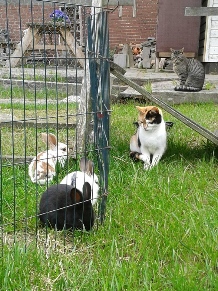 tineke katten konijnen