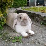 tineke konijn